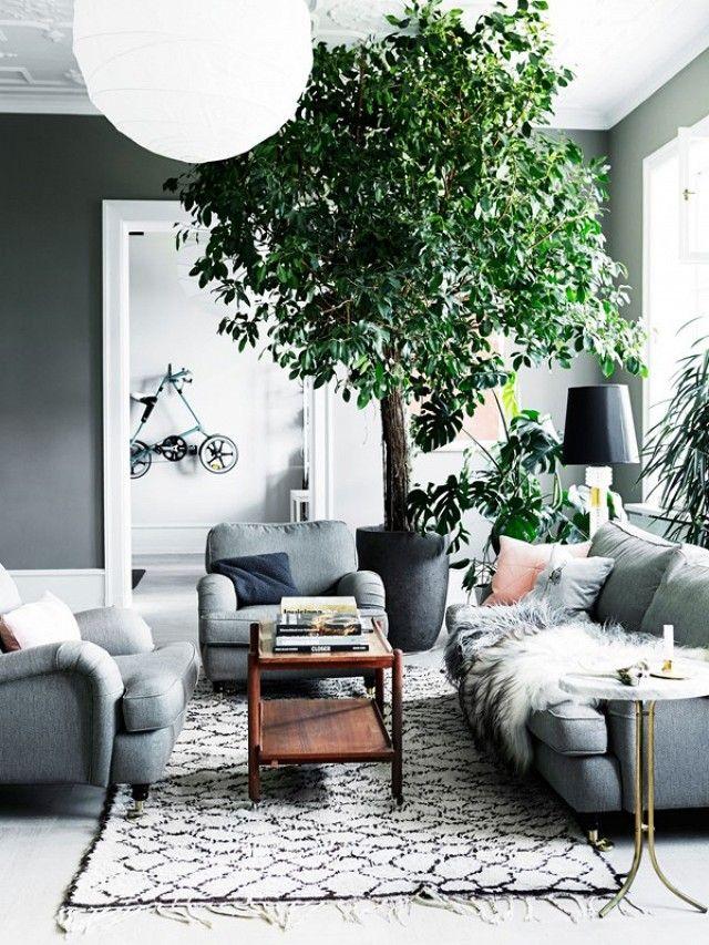 комнатные растения +в интерьере дома