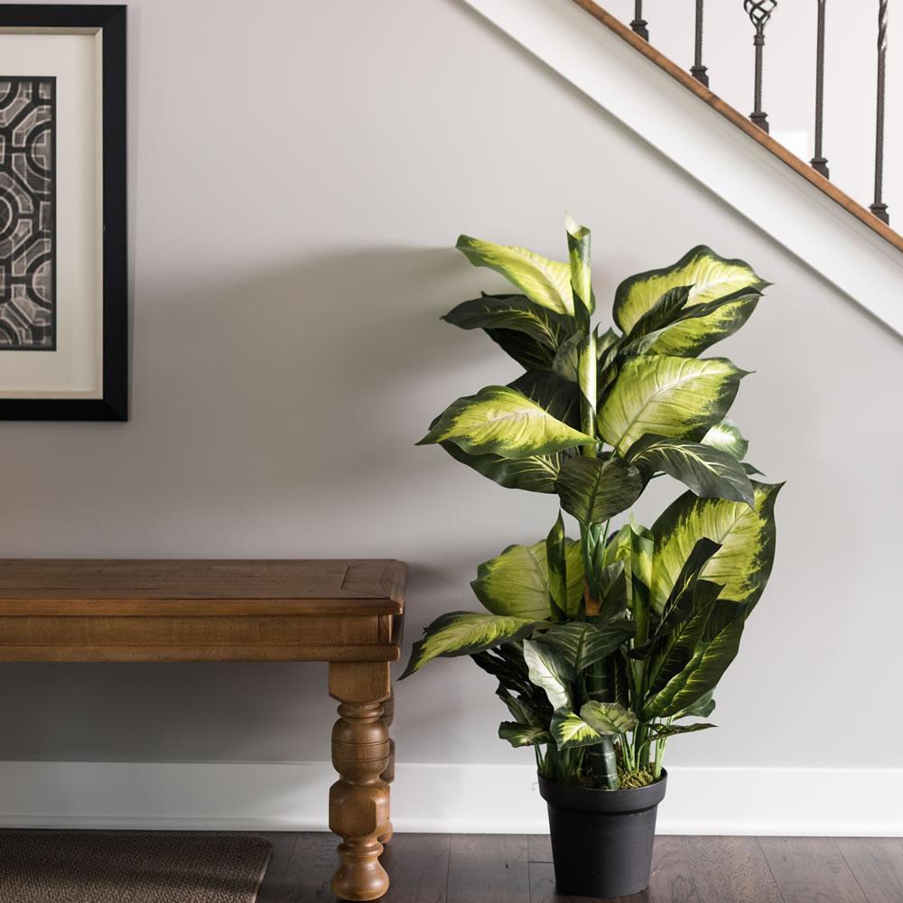 оформление интерьера комнатными растениями
