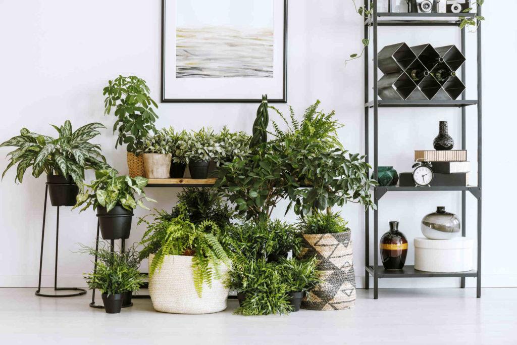 интерьер дома комнатные растения