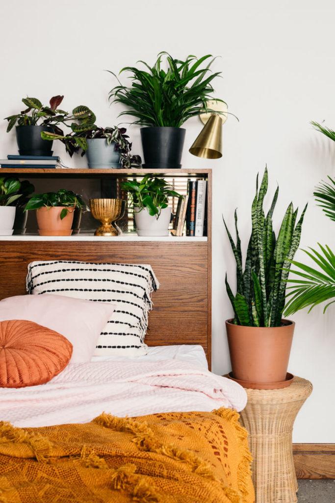 Почему нельзя держать комнатные растения в спальне?