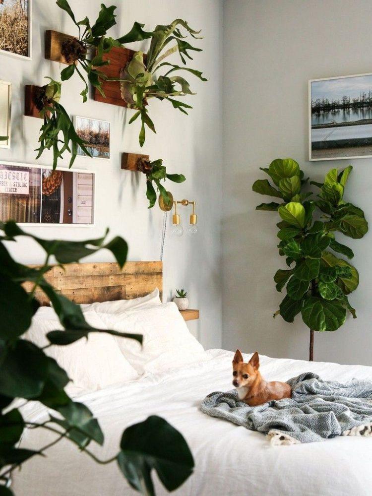 Какие комнатные цветы должны быть в спальне?