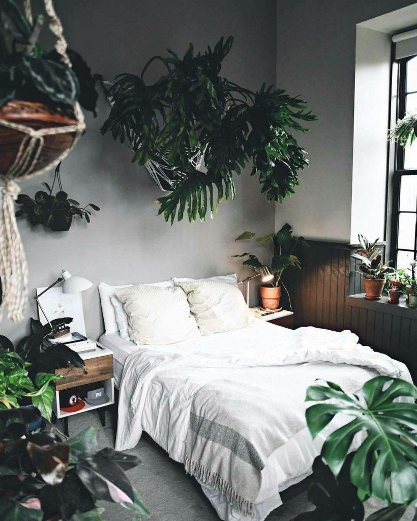 цветы для спальни какие полезны