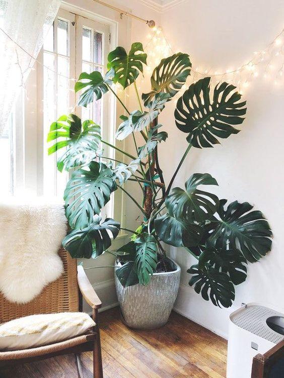 Когда растения поглощают углекислый газ и выделяют кислород?