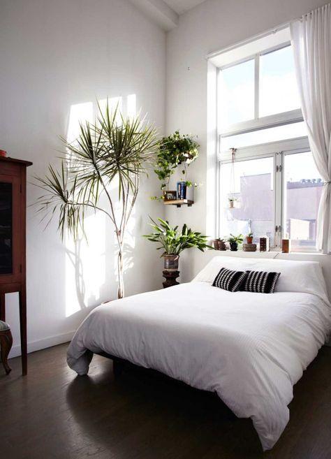 Какие комнатные растения полезны для дома?