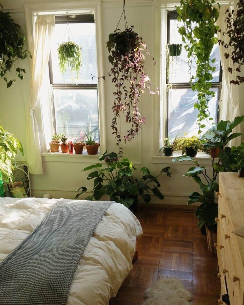 Какие комнатные цветы ночью выделяют кислород?
