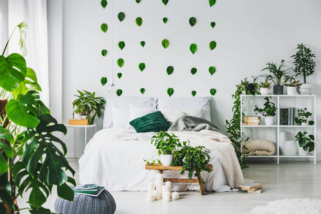 Какие комнатные цветы лучше очищают воздух?