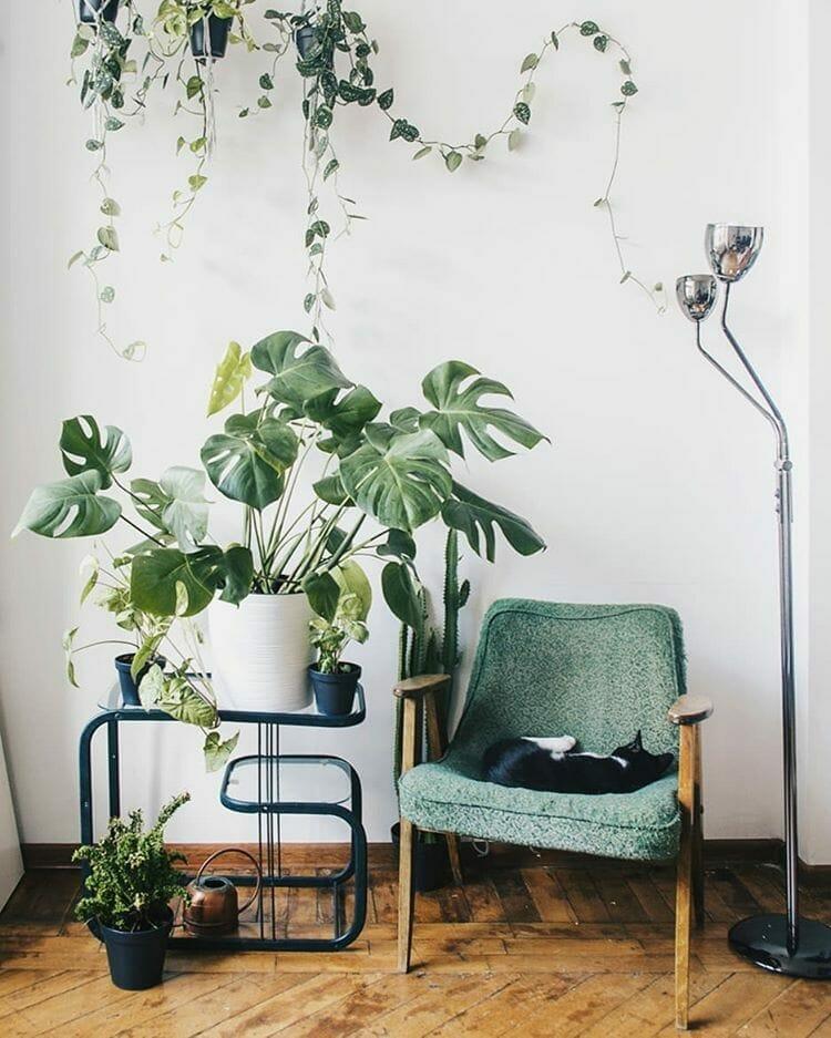 растения в горшках в интерьере