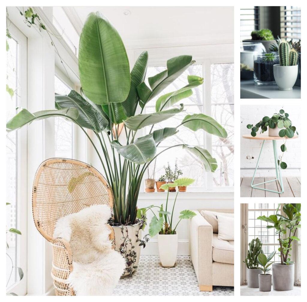 искусство оформления интерьера с растениями